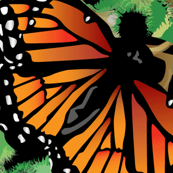 Butterfly Illustration.